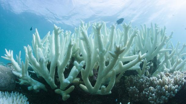 Australia's Great Barrier Reef has experienced three major bleaching events, the worst of which occurred last year (WWF/PA)