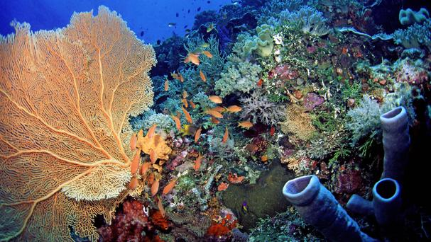 The Indonesian government has summoned the British ambassador to discuss compensation for the destruction of coral reefs by a cruise ship chartered by a British tour company.