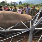 A park ranger in Cambodia said an endangered wild elephant died after an electrical pole fell and sent a powerful current surging through the animal (Wildlife Alliance via AP)