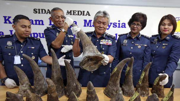 Malaysian customs director Hamzah bin Sundang, centre, poses with the rhino horns at the customs office in Sepang, Malaysia (AP)