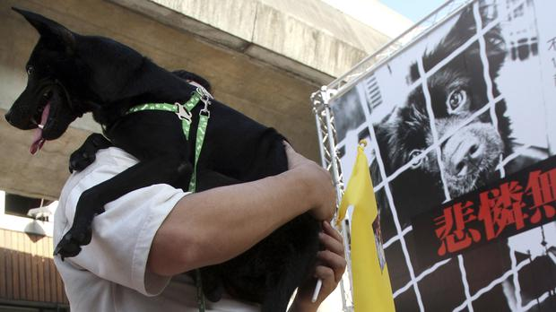 A rally in Taiwan demanding the government set up a department to protect dogs and cats from abusive owners (AP/Chiang Ying-ying)