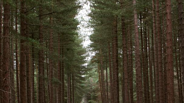 The forest is subject to a number of protections