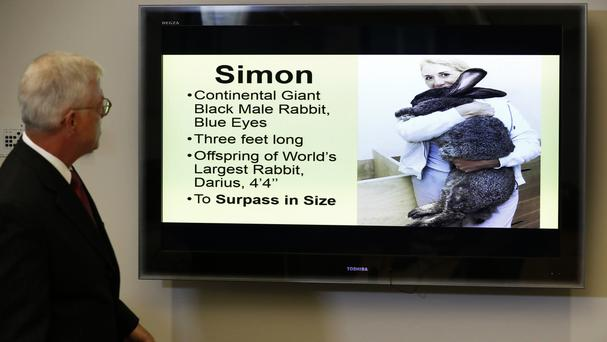 Lawyer Guy Cook looks at a photo of giant rabbit Simon at a news conference in Des Moines, Iowa (Charlie Neibergall/AP)