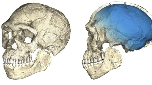 A composite reconstruction of the earliest known Homo sapiens fossils from Jebel Irhoud in Morocco (Philipp Gunz/Max Planck Institute for Evolutionary Anthropology via AP)