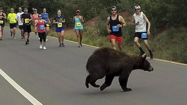 A bear walks across the street as runners compete in the Garden of the Gods 10 Mile Run near Colorado Springs (Donald Sanborn/AP)