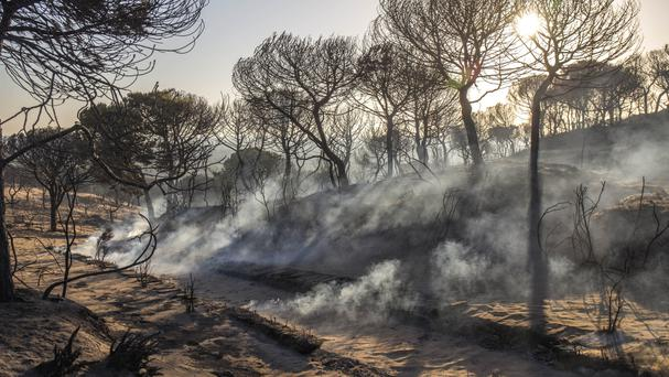 Smoke rises from the ground by charred trees near the access to the Cuesta Maneli beach after a forest fire near Mazagon in southern Spain (AP)