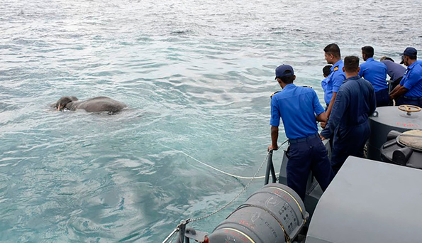 The elephant is rescued 10 miles off the Sri Lankan shore. Photo: Getty Images