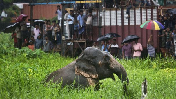 Onlookers watch as a wild male elephant pulls itself out of a muddy pit on the outskirts of Gauhati, India (Anupam Nath/AP)