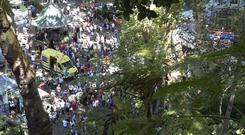 The tree fell during a popular religious festival on the island of Madeira (AP)
