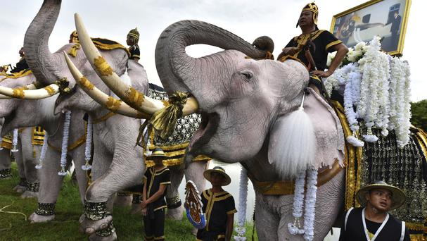Elephants doused in powder to appear an auspicious white, stand to attention and trumpet at a ceremony to mark one year since King Bhumibol Adulyadej's death (AP)
