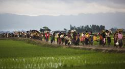 Rohingya refugees walk past rice fields after crossing the border into Bangladesh (AP/Bernat Armangue)