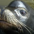 Aggressive behaviour is unusual for sea lions