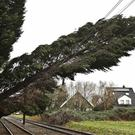 A tree sits on the overhead contact wire of a rail track in Duesseldorf, western Germany (David Young/dpa/AP)
