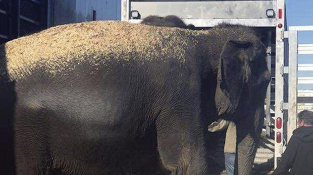 The elephants are transferred to another trailer for transportation (Oklahoma Highway Patrol via AP)