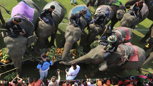 Elephants are fed with fruits before an elephant polo match in Bangkok, Thailand (Sakchai Lalit/AP)