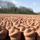 Moulded clay figures are placed in a field that was once a no man's land between the German and British lines of the First World War in Ypres, Belgium (Virginia Mayo/AP)