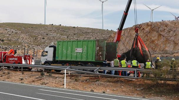An elephant is lifted up by a crane after a circus truck overturned in Spain (El Digital de Albacete/María Guerrero via AP)