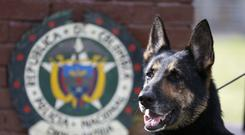 Drug dog Sombra, has helped detect more than 2,000 kilos of cocaine (Fernando Vergara/AP)