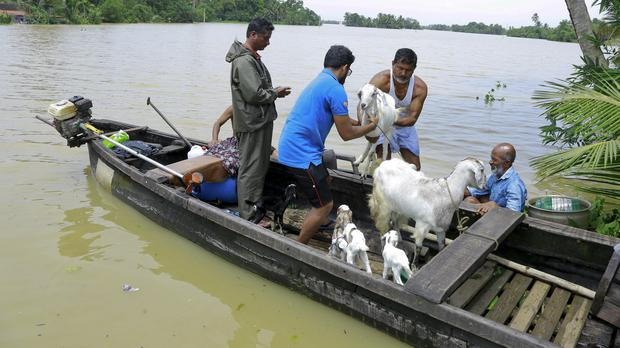 People rescue their goats in a country boat at Kuttanad in Kerala, India (Tibin Augustine/AP)
