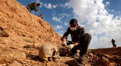 Grim find: An Iraqi man inspects the remains of members of the Yazidi minority killed by Isil in a mass grave near the village of Sinuni in 2015. Photo: Getty