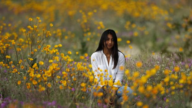 A woman sits in a field of wildflowers in bloom in California (Gregory Bull/AP)