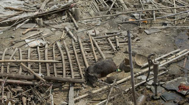 A dead buffalo is lies amidst the debris of damaged structures in a rainstorm in Nepal's Bara district (Niranjan Shrestha/AP)