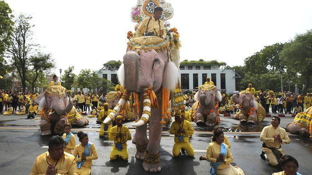 Handlers lead a procession of 10 elephants kneeling outside the Grand Palace in Bangkok (Rapeephat Sitichailapa/AP)