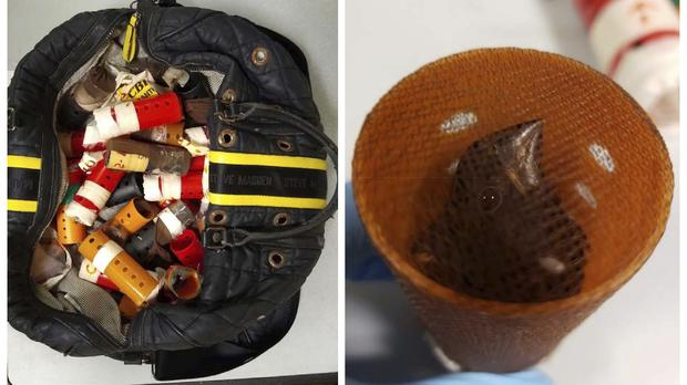 A bag containing hair curlers used to smuggle live finches into the United States from Guyana (US Attorney's Office for the Eastern District of New York via AP)