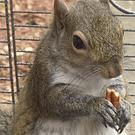 Alabama investigators say a man kept a caged 'attack squirrel' in his apartment and fed it methamphetamine to ensure it stayed aggressive. (Limestone County Sheriff's Office/AP)