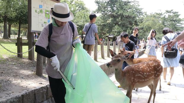 A volunteer picks up plastic products during a cleanup campaign at a famed park in Nara, western Japan (Kyodo News/AP)