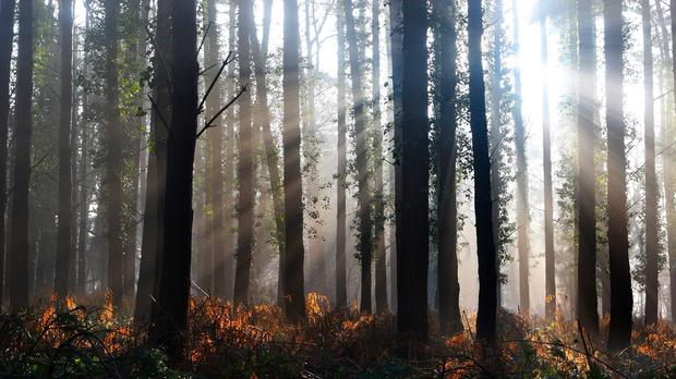 'Nowadays, however, young people are concerned about the environment and understand that trees are the lungs of the planet, giving fresh air and visual beauty, and homes for animals' (stock photo)