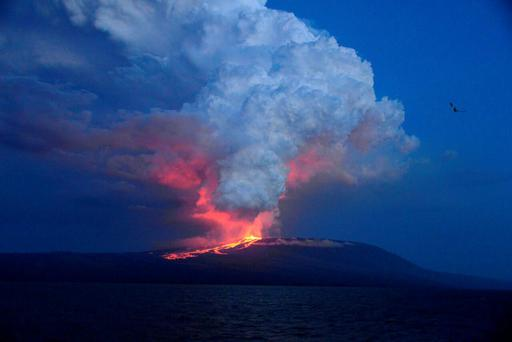 Wolf volcano erupting at Isabela Island, one of the Galapagos Islands. Photo: AP