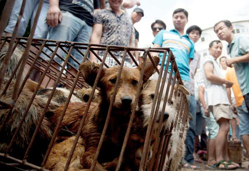 Dogs in cages are sold by vendors at a market during a dog meat festival in Yulin in south China's Guangxi Zhuang Autonomous Region