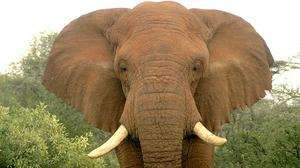 14 elephants were poisoned by cyanide in Zimbabwe in three separate incidents
