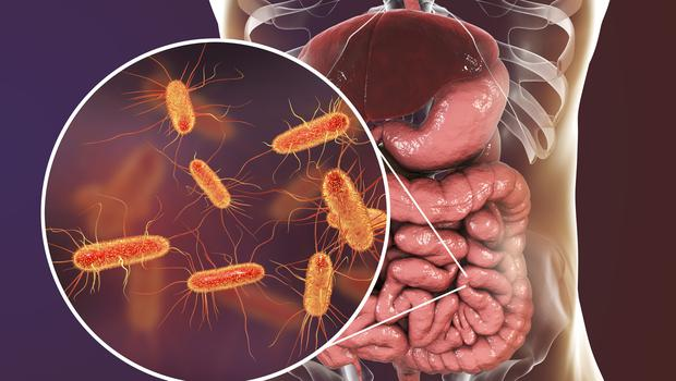 the researchers analysed the gut microbiome of their test subjects (Dr Microbe/Getty Images)