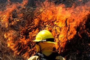 Inferno: A firefighter battles the blaze to the east of Los Angeles. Photo: Ringo H.W. Chiu/AP