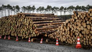 Cleared trees stacked at the entrance to the site for the planned Tesla factory near Gruenheide, Germany (Britta Pedersen/dpa via AP)