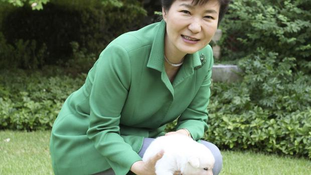 Park Geun-hye pictured with dogs at the presidential Blue House in Seoul in September 2015 (South Korean Presidential Blue House/AP, File)