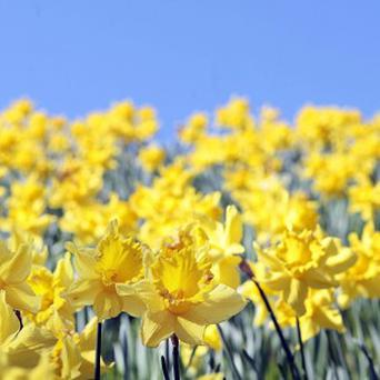 Southern areas of England should expect temperatures of around 15C