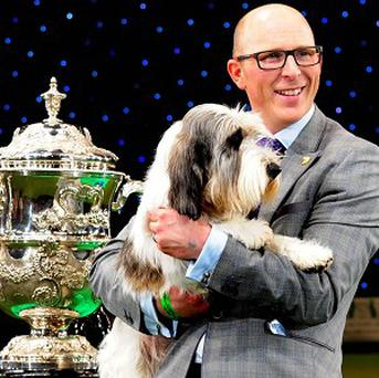 A Petit Basset Griffon Vendeen named Jilly, with owner Gavin Robertson, after winning Best in Show at Crufts 2013