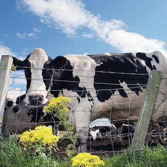 More than 28,000 cattle tested positive for bovine TB or were in close proximity to an animal which contracted it last year
