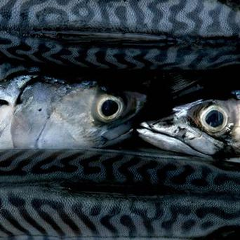 Eating more oily fish such as mackerel can help you live longer, according to a new study