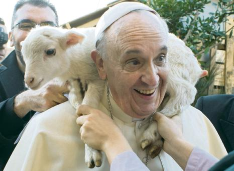 Pope Francis smiles after meeting lamb. AP Photo/Osservatore Romano