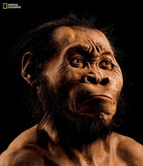 A reconstruction of the mysterious, ancient human called homo naledi, whose bones were discovered in a remote cave in South Africa and may have lived around two million years ago