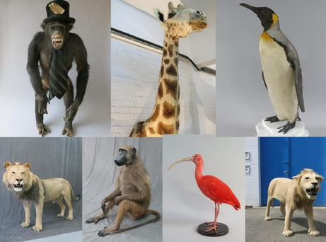 A series of stuffed animals stolen by Jason Hopwood. Photo: REUTERS
