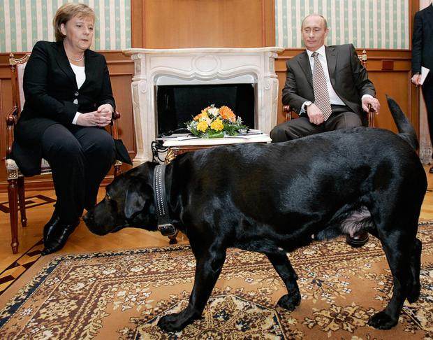 Merkel with Russian President Vladimir Putin and his dog Koni in 2007