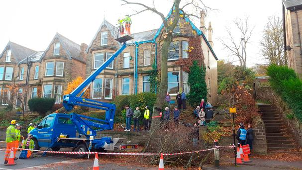 Contractors cut down the final tree in Rustlings Road, Sheffield, where three people protesting against a controversial tree felling programme have been arrested after council contractors started cutting down trees with chainsaws before dawn. Photo: Dave Higgens/PA Wire