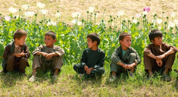Afghan children with a poppy crop – the US government has spent billions of dollars attempting to eliminate opium production in Afghanistan but the country remains the world's top producer of the drug. Photo: Getty Images