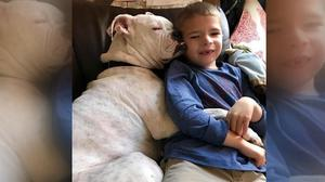 Connor (six) with his dog Ellie Photo: Deaf Dogs Rock FB