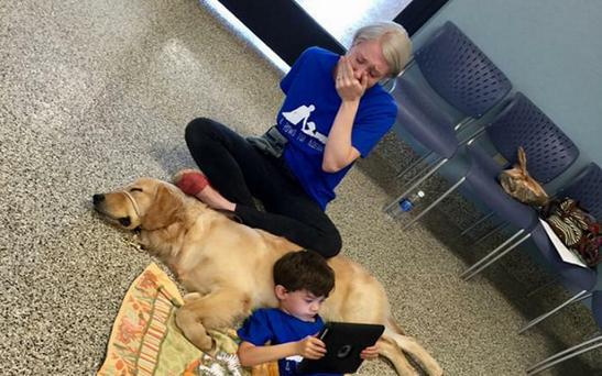 Kainoa Niehaus meets service dog Tornado thanks to 4 Paws For Ability Credit: 4 Paws For Ability / Facebook